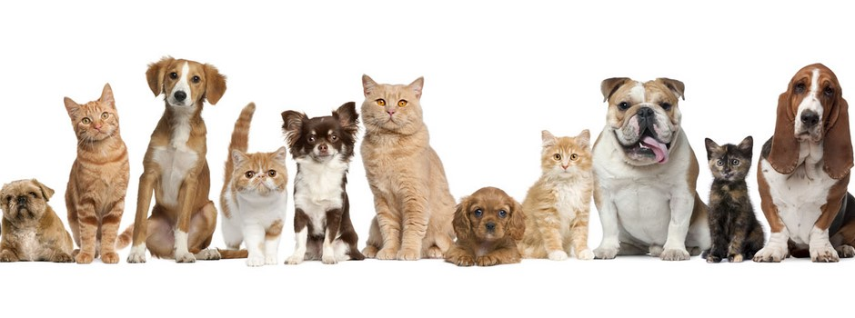 pets-lineup-xlg.jpg